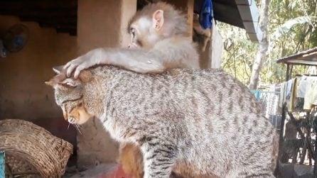 La scimmietta orfana adottata da una gatta: un'amicizia speciale che non conosce ostacoli