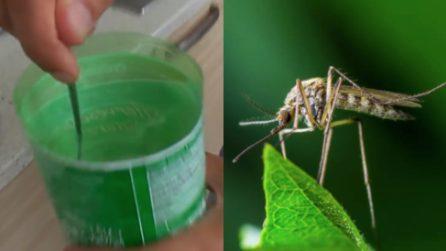 Trappola per zanzare fai da te: il metodo naturale per tenerle lontane