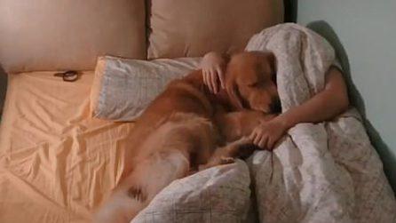 Il padrone mostra cosa fa il cane nel suo letto: quello che accade l'ultima notte è esilarante