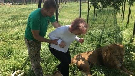 Una donna entra nel recinto di due leoni per accarezzarli: la scena è sorprendente
