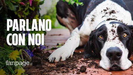 """I cani fanno lo """"sguardo triste"""" per attirare la nostra attenzione: uno studio lo dimostra"""