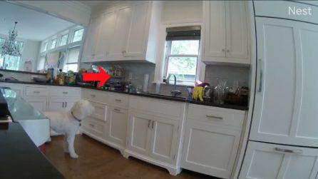 """Mettono le telecamere in cucina: scoprono il """"ladro"""" in azione"""