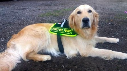 Il dono dei cittadini ai cani eroi del Ponte Morandi: nasce il primo studio veterinario mobile