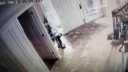 Terremoto California, la reazione del cane alla violenta scossa