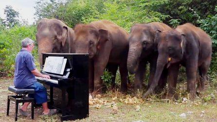 Suona per gli elefanti malati e ciechi alleviando il loro dolore. Il pianista dal cuore d'oro