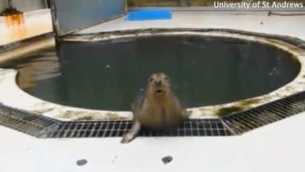 Le insegnano a cantare: la foca canterina intona la famosa canzone