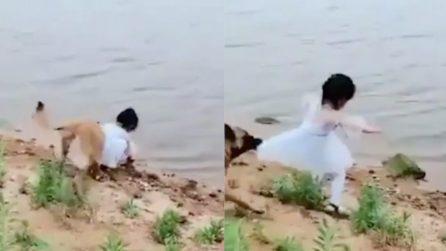 La bambina si accovaccia per recuperare la pallina in acqua: il cane interviene subito