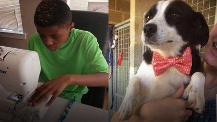 A 12 anni cuce a mano papillon per aiutare cani e gatti abbandonati a trovare un nuovo padrone