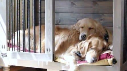 Per non abbatterlo il cucciolo è rimasto cieco: ritrova la sua felicità grazie a un'amica speciale