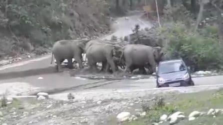 Gli elefanti attaccano gli automobilisti: panico per i turisti