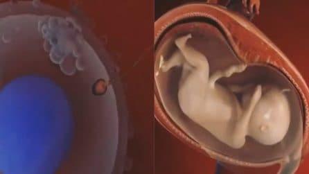 Dalla fecondazione alla nascita: un minuto ricco di emozioni