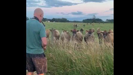 Suona col sax in un campo: una mandria di buoi si avvicina all'uomo