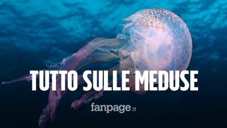 Le 5 curiosità sulle meduse: perché ci attaccano e quali sono le più pericolose
