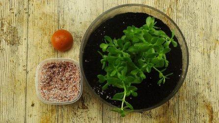 Come riutilizzare i gusci d'uova per il giardinaggio: un'idea brillante e facile!