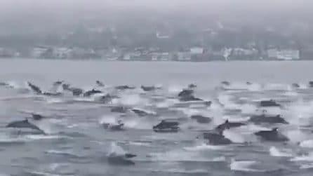 Decine di delfini seguono il motoscafo: ecco cosa succede