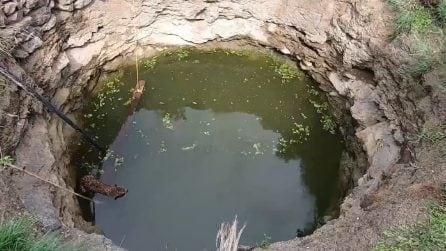 In fondo al pozzo un leopardo sta annegando: l'intervento provvidenziale