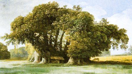 Il Castagno dei Cento Cavalli, si trova in Italia l'albero più grande e antico d'Europa