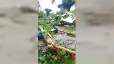 Maltempo, Parco di Cervia devastato da una tromba d'aria