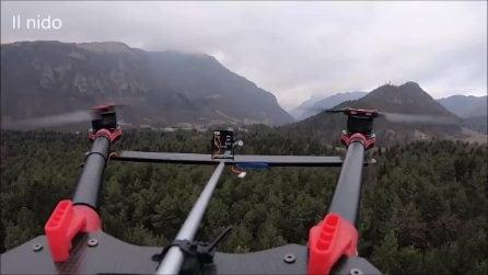 Invasione di processionarie, l'idea di una startup: ecco come distruggere i nidi grazie ai droni