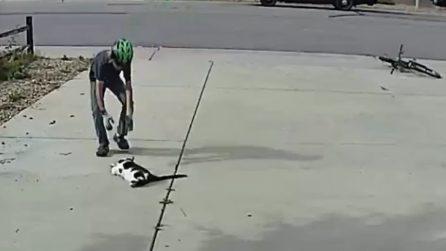 Bambino trova il gatto a terra, i padroni riprendono la scena meravigliosa