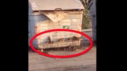 Cassonetto dell'immondizia pieno di topi: il video che gira e diventa virale