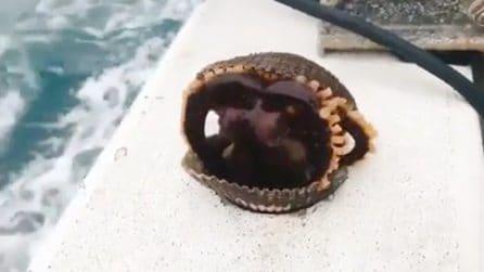 La conchiglia si apre all'improvviso: ciò che esce lascia i pescatori di sasso