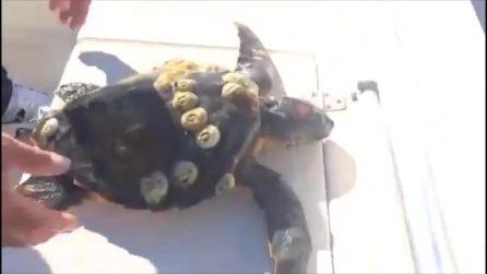 Pescano una tartaruga nelle acque del Salento e fanno una scoperta scioccante