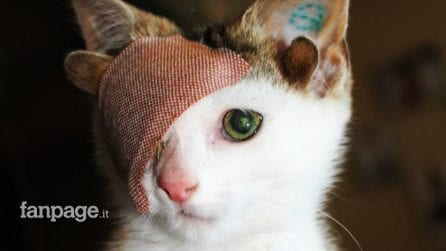 Ha un solo occhio e quattro orecchie, il gatto che ha conquistato il mondo con la sua dolcezza
