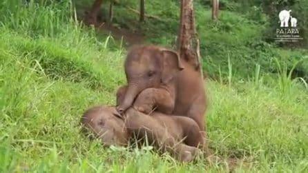 L'elefantino vuole giocare, ma il fratellino non ne vuole proprio sapere di svegliarsi