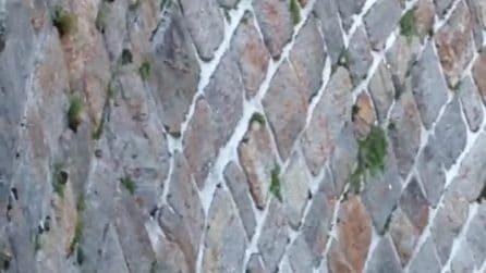 Val Brembana, stambecchi equilibristi sulla parete verticale della diga: lo spettacolare video