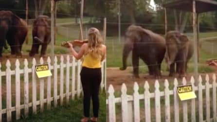 Gli elefanti amano la musica classica: questi due ballano sentendo un violino
