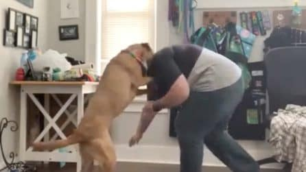 La donna ha un attacco d'ansia: il suo cane sa come farglielo passare