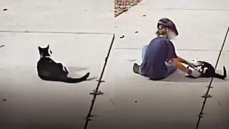 """Questo gatto senza un occhio ha un amico """"segreto"""": le telecamere filmano una scena dolcissima"""