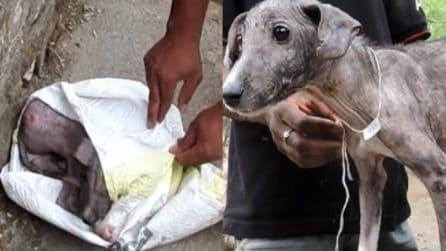 Abbandonato in una busta di plastica: la trasformazione del cucciolo dopo il salvataggio