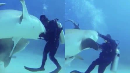 """Immersione da """"brividi"""": il sub accarezza lo squalo, poi la reazione dell'animale"""