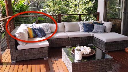 Esce per godersi il divano in veranda ma trova una terribile sorpresa