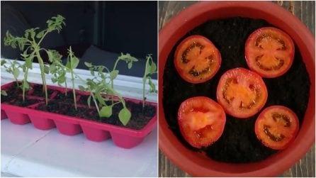 10 trucchi di giardinaggio che vi faranno diventare esperti del verde!