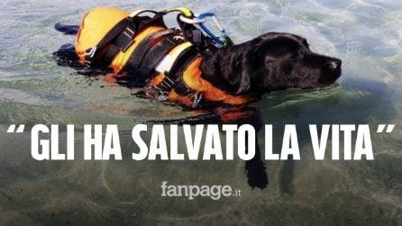 "Palinuro, cane salva 16enne che sta annegando: chi è Flash, la ""bagnina a 4 zampe"""
