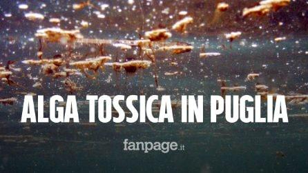 Alga tossica in Puglia: bollino rosso sul tratto di mare Barese e del Salento