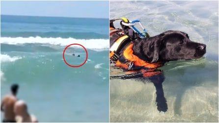 Palinuro, salva un ragazzo che sta annegando: Flash e gli angeli a 4 zampe delle spiagge italiane