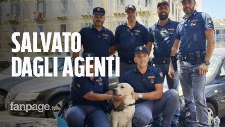 Labrador intrappolato in auto sotto al sole: poliziotti rompono il vetro e lo salvano