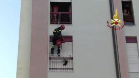Terni, gattino cade dal sesto piano e resta incastrato: il salvataggio dei vigili del fuoco