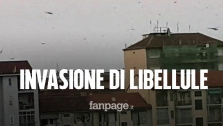 Invasione di libellule a Torino: migliaia di insetti si sono posati sui balconi dei residenti