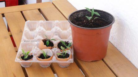 2 trucchi incredibili che gli amanti del giardinaggio non vedranno l'ora di provare!