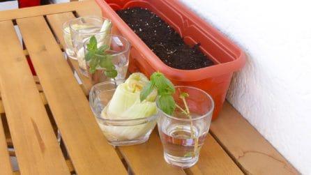 Come riutilizzare gli scarti del cibo per fare giardinaggio!