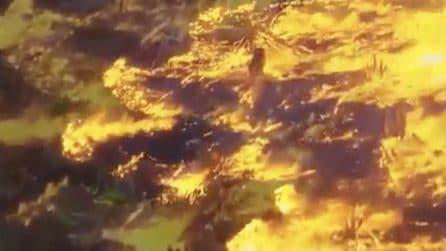 Brasile, Amazzonia in fiamme: il fuoco la sta divorando
