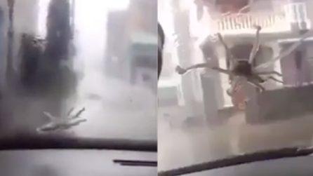 Piovono polpi dal cielo: la spaventosa forza del tifone fa volare di tutto in strada
