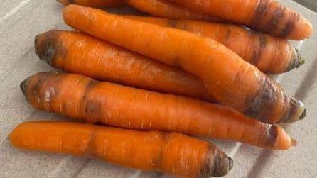 Come conservare le carote per mantenerle fresche a lungo