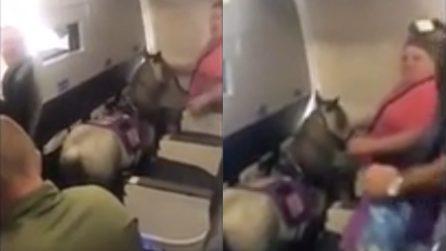 La passeggera sale sull'aereo con un pony: la scena assurda