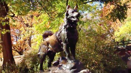 Balto, la storia vera del cane che salvò i bambini dall'epidemia e divenne un eroe